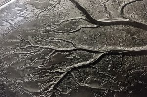 aerial black and white image of a salt marsh in Essex with am intricate tree root like pattern on the landscape